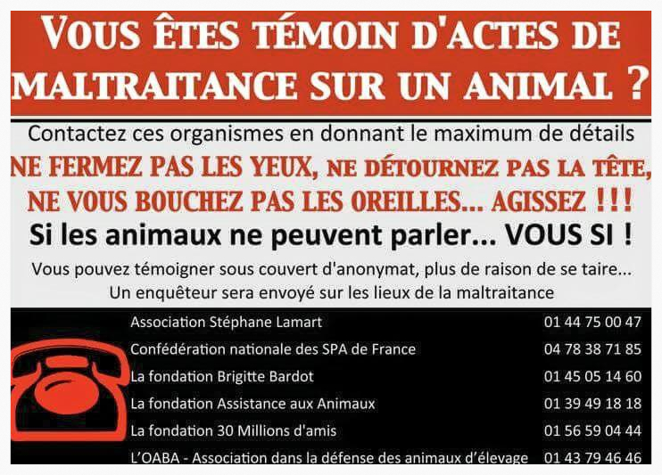 SOS Animaux en danger