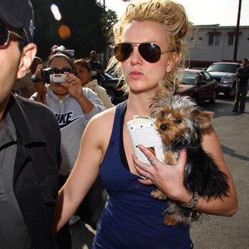 Britney Spears et son Yorkshire