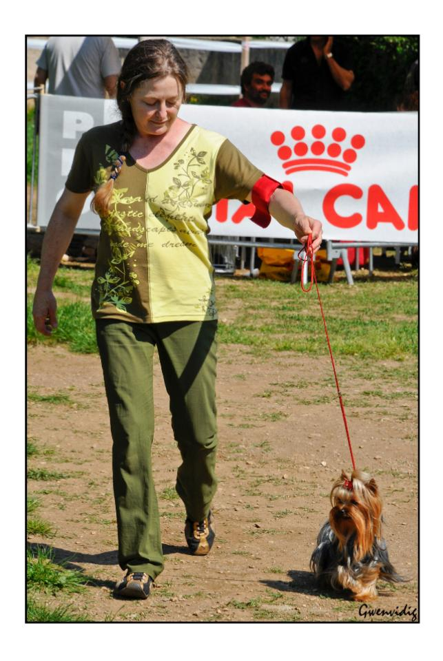 Exposition Canine Internationale Cacs Cacib Yorkshire of Meadow Cottage