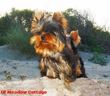 Ginger-Lee  of Meadow Cottage