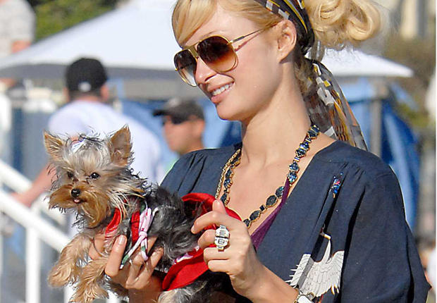 Paris Hilton et son petit York
